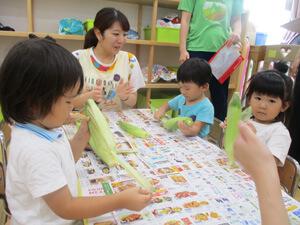 茨城県つむぎ保育園龍ヶ崎園 とうもろこしで食育写真