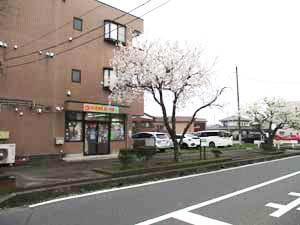 茨城県つむぎ保育園龍ヶ崎園 園舎と桜写真